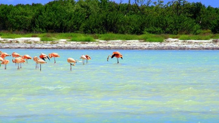 Holbox, Cozumel y Tulum se llevan premios en los World Travel Awards