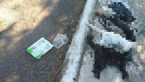 Denuncian envenenamiento de gatos en el poniente de Mérida   PorEsto