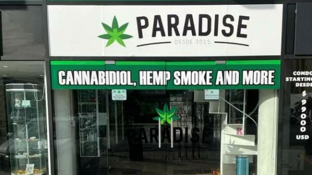 Inauguran Paradise, la tienda que vende productos derivados de marihuana en  Playa del Carmen   PorEsto