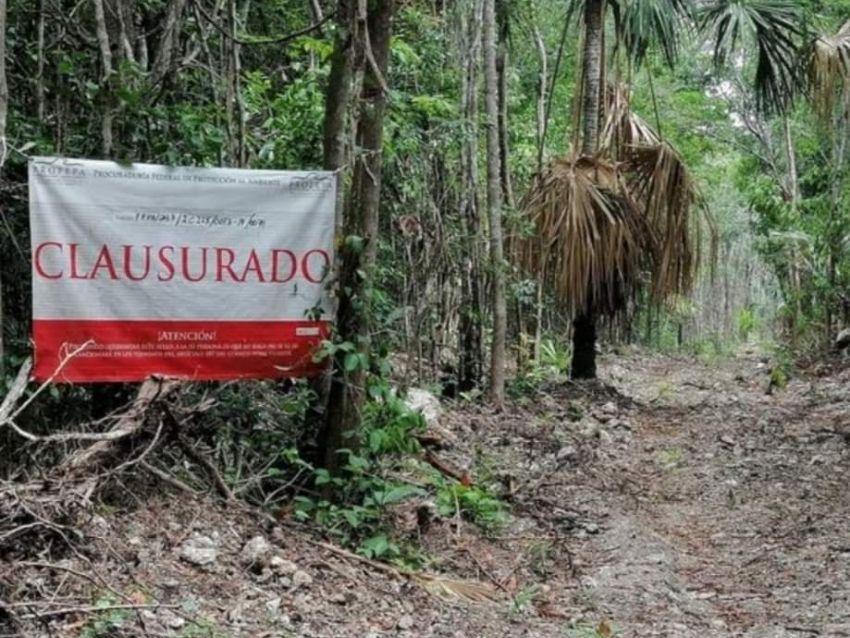 Denuncian ecocidio en el Estero de Chac en Chetumal, Quintana Roo | PorEsto