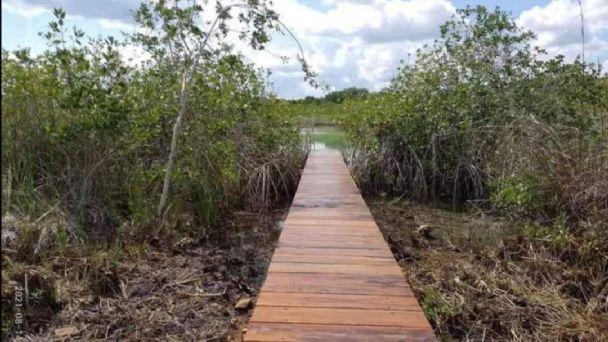 Pobladores acusan a Profepa de encubrir ecocidio del Estero de Chac en  Chetumal   PorEsto