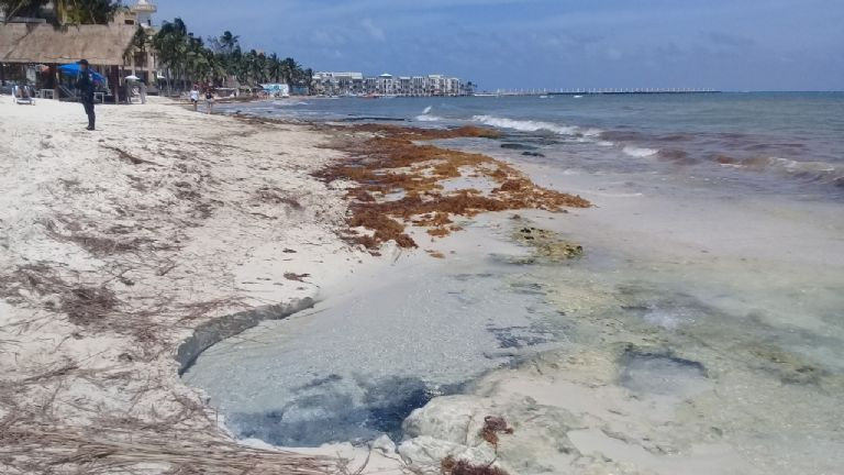 Corriente del mar deja al descubierto los dos ojos de un cenote en Playa  del Carmen | PorEsto